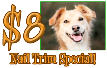 pet nail trim in ormond beach