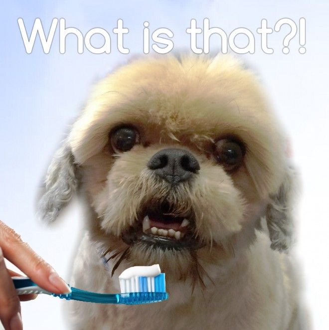 dog dental hygiene