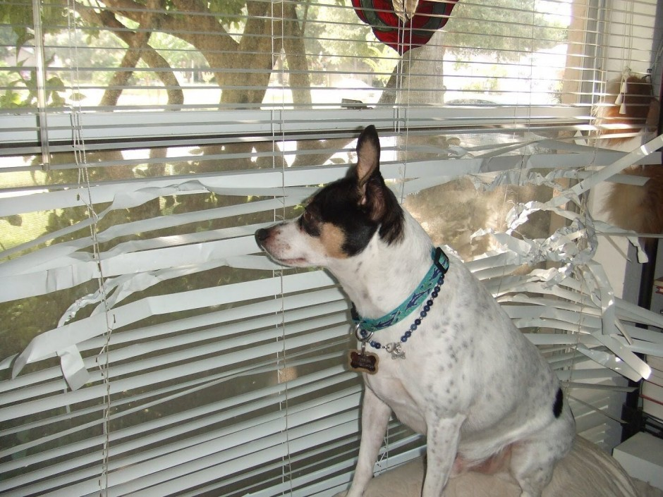 Dog Blinds Separation Anxiety