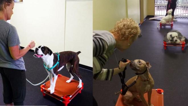 abra-dog-training-ormond-beach