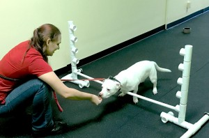 dog being trained in ormond beach, fl